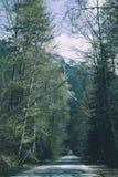 Zonnige mooie romantische bos geasfalteerde weg in de bergen Royalty-vrije Stock Foto's
