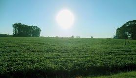 zonnige ochtend stock foto
