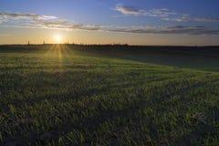 Zonnige ochtend in de landbouwgrond Stock Foto's