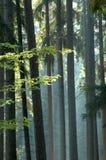 Zonnige ochtend in het bos Royalty-vrije Stock Afbeeldingen