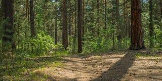 Zonnige opheldering in het bos op een de zomerdag stock fotografie