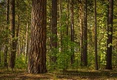 Zonnige opheldering in het bos op een de zomerdag stock afbeelding
