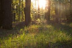 Zonnige opheldering in het hout Royalty-vrije Stock Afbeeldingen