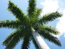 Zonnige Palm Royalty-vrije Stock Afbeeldingen
