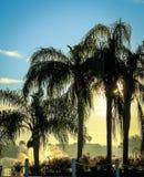 Zonnige palmen Stock Foto's