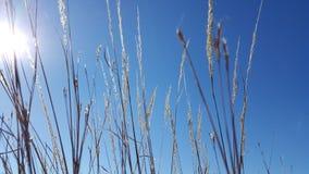 Zonnige prairie Royalty-vrije Stock Fotografie