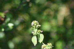 Zonnige purpere bloem royalty-vrije stock foto
