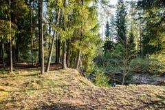 Zonnige toeristensleep in het hout in de herfst stock foto