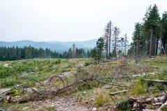 Zonnige toeristensleep in het hout in de herfst stock foto's