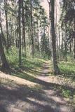 zonnige toeristensleep in het hout in de lente - uitstekend effect Royalty-vrije Stock Afbeeldingen