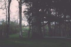 zonnige toeristensleep in het hout in de lente - uitstekend effect Royalty-vrije Stock Foto