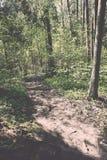 zonnige toeristensleep in het hout in de lente - uitstekend effect Royalty-vrije Stock Foto's