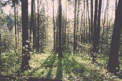 zonnige toeristensleep in het hout in de lente - uitstekend effect Stock Foto's