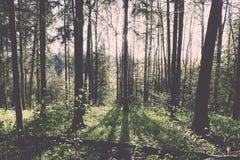 zonnige toeristensleep in het hout in de lente - uitstekend effect Stock Fotografie