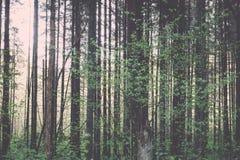 zonnige toeristensleep in het hout in de lente - uitstekend effect Stock Afbeelding