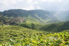 Zonnige toneelbergmening over theeaanplanting in de hooglanden van Cameron in Maleisië royalty-vrije stock afbeelding