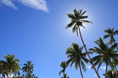 Zonnige tropische dag Stock Foto's