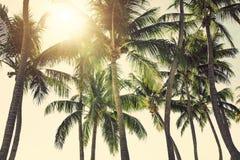 Zonnige tropische hemel Stock Afbeelding