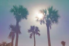 Zonnige tropische hemel Royalty-vrije Stock Fotografie