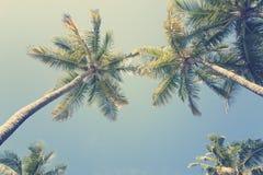 Zonnige tropische hemel Stock Afbeeldingen