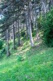 Zonnige verse ochtend in het bos Royalty-vrije Stock Afbeeldingen