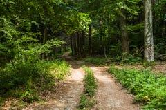 Zonnige weg die in een donker bos binnengaan Royalty-vrije Stock Foto's