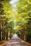 Zonnige weg door kleurrijk Tsjechisch hout Brdy Stock Fotografie