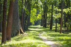 Zonnige weg in het bos Stock Afbeelding