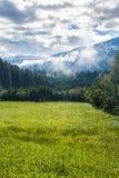 Zonnige weide in de Alpen Stock Foto's