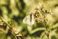 zonnige weide met bloemen en vlinder - uitstekend oud effect royalty-vrije stock foto