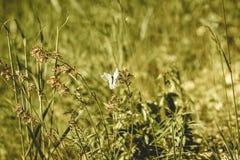 zonnige weide met bloemen en vlinder - uitstekend oud effect royalty-vrije stock foto's
