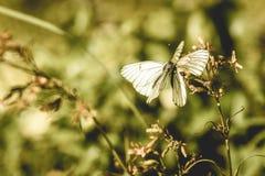 zonnige weide met bloemen en vlinder - uitstekend oud effect stock fotografie