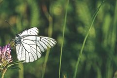 zonnige weide met bloemen en vlinder - uitstekende retro ziet eruit royalty-vrije stock afbeeldingen