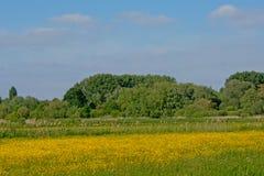Zonnige weide met hoogtepunt van gele wildflowers met weelderig groen erachter bos royalty-vrije stock afbeelding