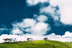 Zonnige weide met koeien onder een mooie hemel stock foto