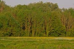 Zonnige weide met vele witte en gele wildflowers met weelderig groen erachter bos stock afbeelding