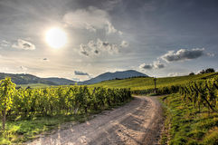 Zonnige wijngaarden Stock Foto's