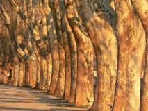 Zonovergoten Bomen Stock Foto