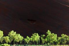 Zonovergoten bomen bij de rots in Australië. Royalty-vrije Stock Afbeeldingen