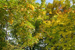 Zonovergoten bomen in de herfst Stock Afbeelding