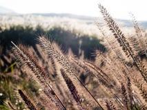 Zonovergoten gras op de weiden in de vulkanische caldera van Aso royalty-vrije stock afbeeldingen