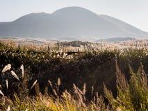 Zonovergoten gras op de weiden in de vulkanische caldera van Aso stock foto's