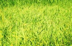 Zonovergoten Grasrijke Weide stock fotografie