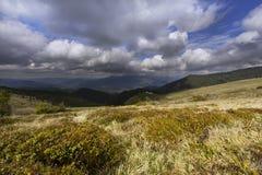 Zonovergoten grassen op hoge berghelling Royalty-vrije Stock Afbeeldingen