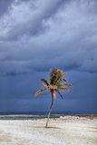 Zonovergoten palm met stormachtige wolken op de achtergrond Het Eiland van het paradijs, de Bahamas Royalty-vrije Stock Foto's