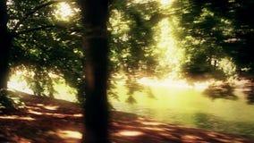 Zonovergoten parkvijver en steeg in de zomer stock video