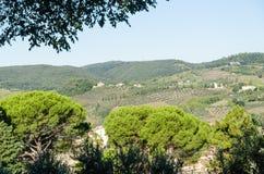 Zonovergoten rollende heuvels in Toscanië royalty-vrije stock foto