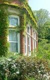 Zonovergoten vensters van de oude rode die baksteenbouw door groene installatie wordt behandeld Royalty-vrije Stock Afbeelding