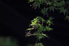 Zonovergoten verlichting op de verse bladeren royalty-vrije stock afbeeldingen