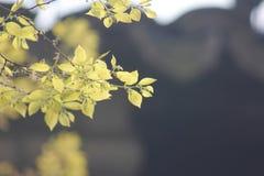 Zonovergoten verlichting op de verse bladeren stock foto
